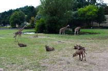 05 Safari Park Dvůr Králové
